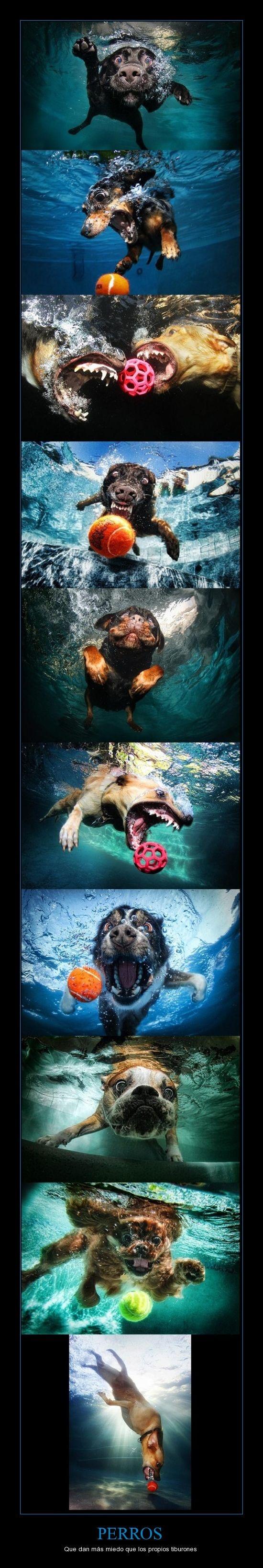 #Perros submarinos - Underwater #dogs