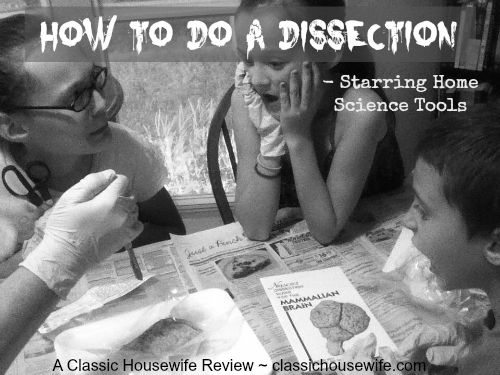 Mammal organs dissection kit review from Classic Housewife.  We must add this to our study!
