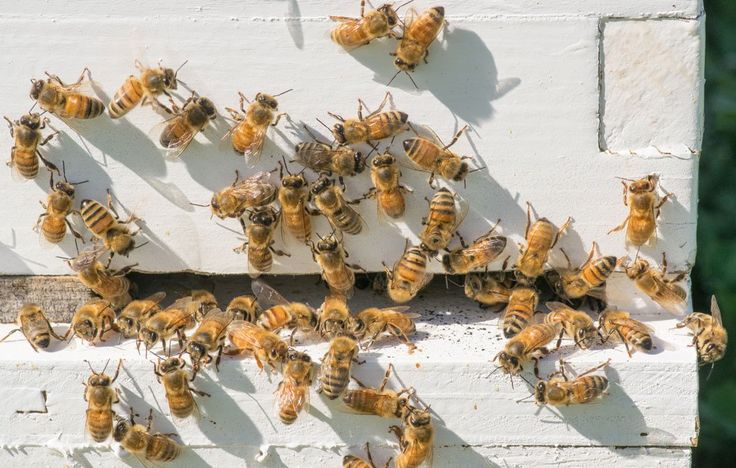 5 Things You're Doing Every Day That Are Hurting Honeybees -- You can support precious pollinators with these easy actions.
