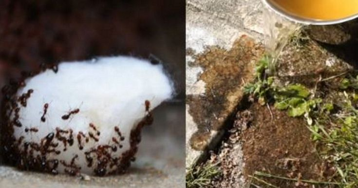 Onko kodissasi tai puutarhassasi muurahaisia? En olisi arvannut, että tämä toimii näin hyvin.