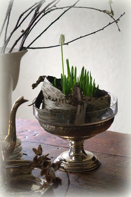 Leuke decoratie tip voor druifjes. Voorjaar - lente - spring