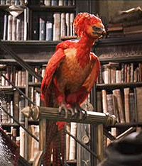 Fawkes was a highly intelligent phoenix and Albus Dumbledore's magical familiar and defender.
