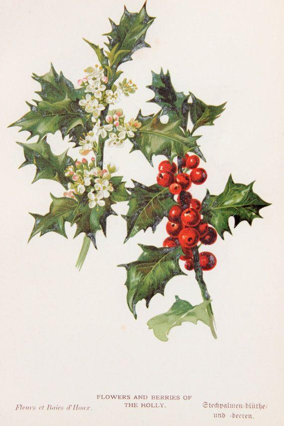 Christmas Holly Tree Part - 24: Best 25+ Holly Tree Ideas On Pinterest | Holly Power, Celtic Calendar And  Celtic Astrology