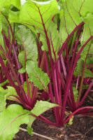 10 vegetables you can grow in the shade.
