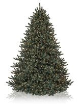 Balsam Hill Blue SpruceBlue Christmas, Spruce Artificial Christmas, Christmas Lights, Blue Spruce Artificial, Beautiful Artificial, Christmase Winte, Christmas Ideas, Christmas Trees, Holidays Christmas