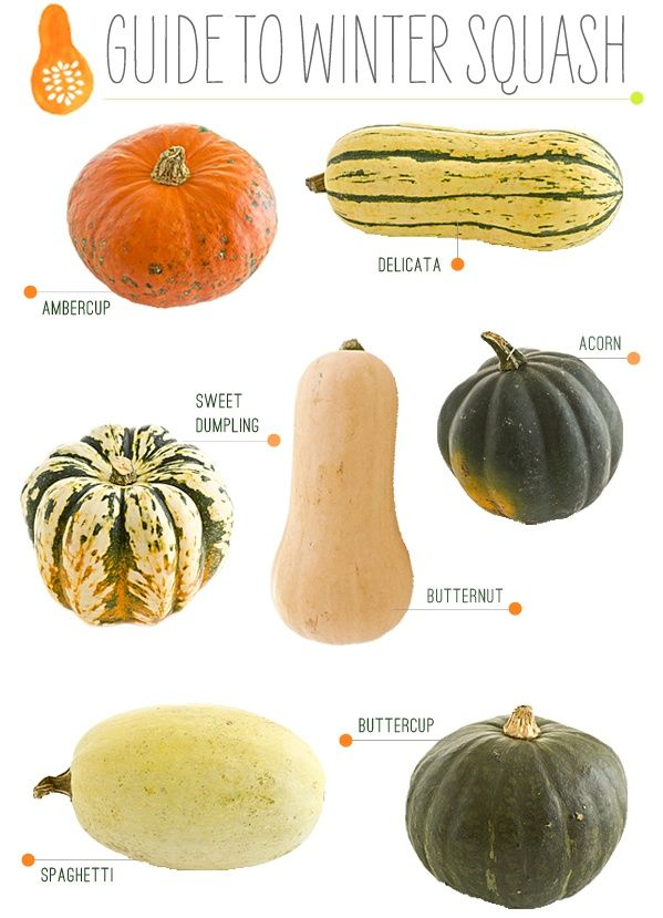 Falls/Winter Squash - They are great carbohydrates and provide good vitamins! There is so much we can do with squash! <3