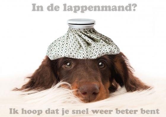 Beterschapskaart met hond met ice pack( hoofdpijn zak) op zijn hoofd (@Karen van Gerner Fotografie)