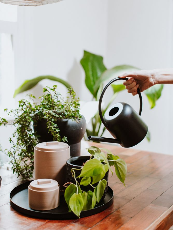 The Beginner S Guide To Botanical Styling House Plant Care