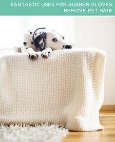 Pelos de Animais | Como limpar (quase) tudo e mais alguma coisa