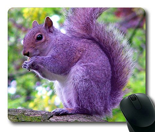 how to tell how old a squirrel is