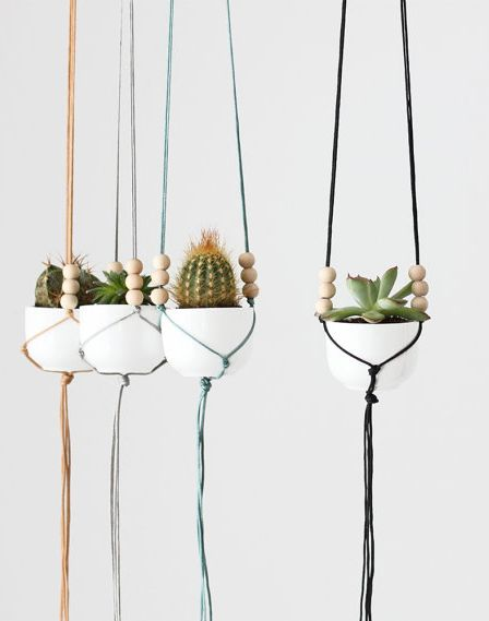 hanging  cactus - I dig this