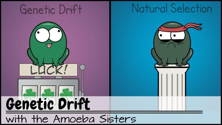 Genetic Drift - YouTube