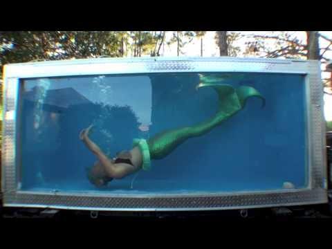 Performance tank inquiries for Little mermaid fish tank
