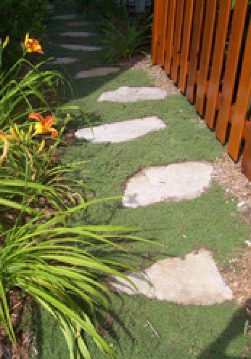 Plante couvre-sol Thymus serpyllum