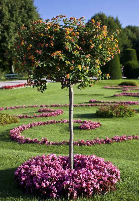 20 best images about landscaping on pinterest gardens for Short trees
