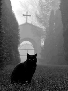 I have a terrorific, Halloween black cat like this.  Fits him well.
