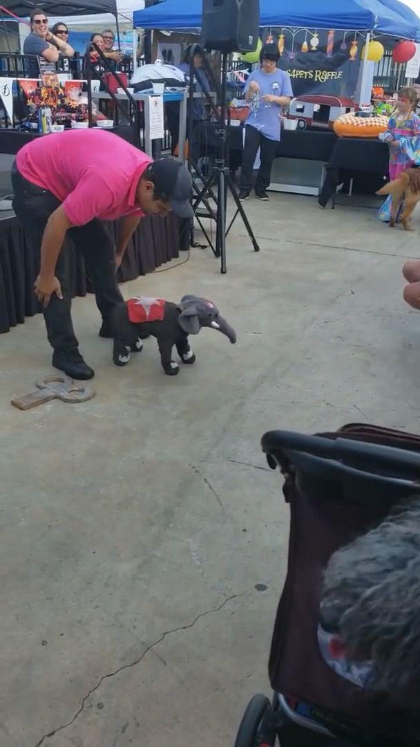 Elefantenbaby oder Hund? 😁😂   – Zwierzęta