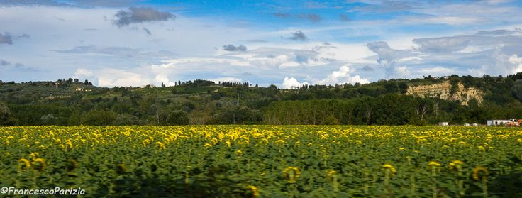 Campi di girasole #Tuscany #sunflowers #travel