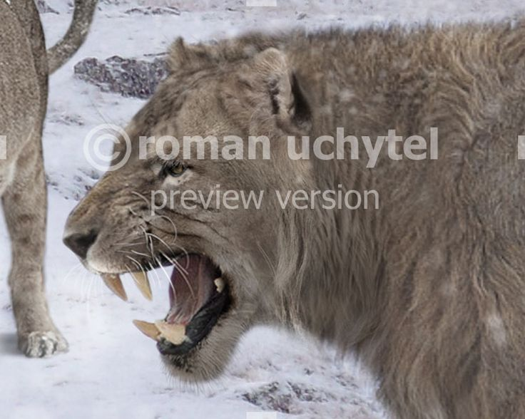 Panthera (Leo) spelaea