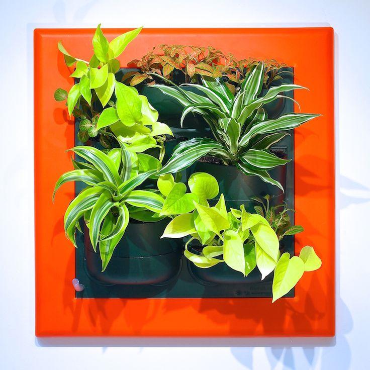 Фитокартины Flowall   фитостены   фитомодули #verticalgarden #greenwall #livingwall #Green #Wall #minigarden #фитокартины #фитостены #Flowall