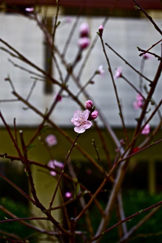 A happy blossom, Palaio Faliro – Athens
