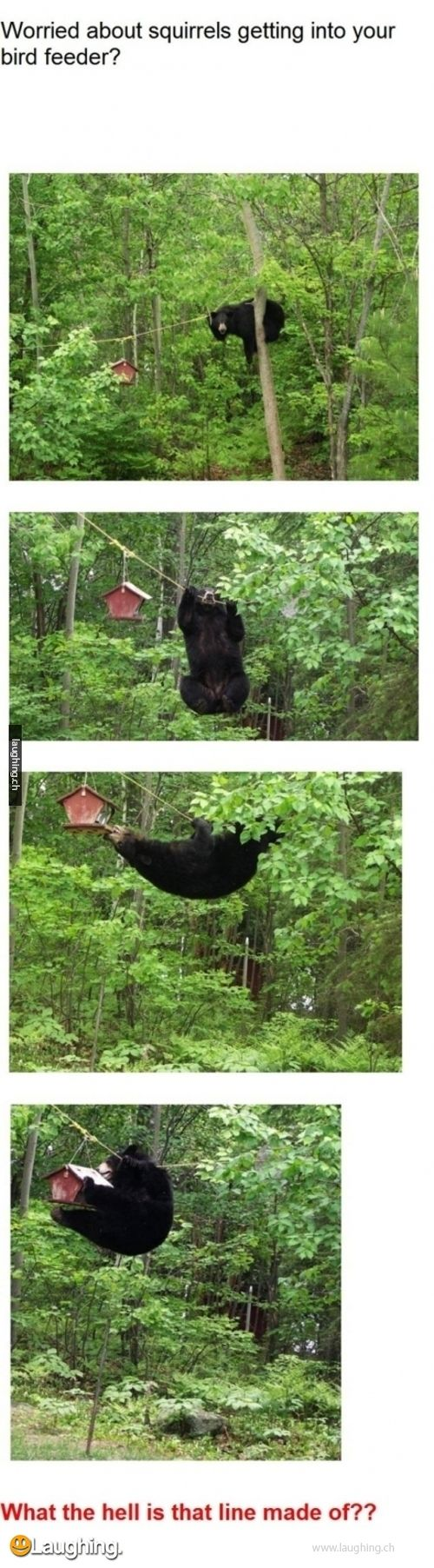 When a bear just wants to be a Navy SEAL.....