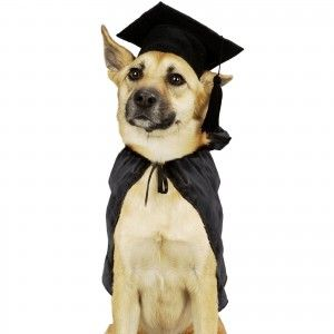 Choosing the right dog obedience school
