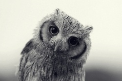 .: Hello, Pet, Beautiful, Owl Obsession, Cute Owl, White Owl, Photo, Great Grey Owl, Adorable Animal