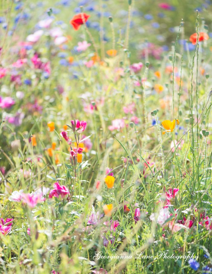Wild flowers, photography by Georgianna Lane