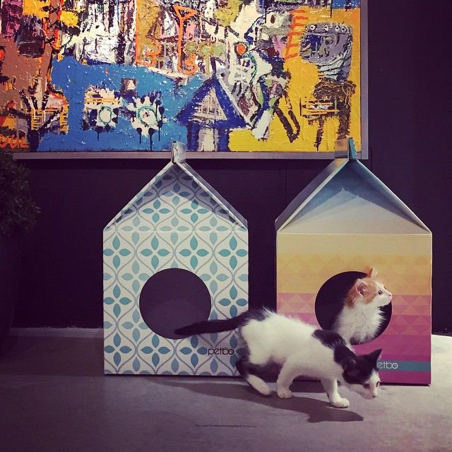 Houses for cats #petbo
