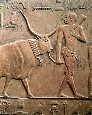 Relief depicting a peasant leading a cow to sacrifice, from the Mastab of Ptah-Hotep and Akhti-Hotep, Old Kingdom (limestone). 5th Dynasty (c.2494-2345 BC).