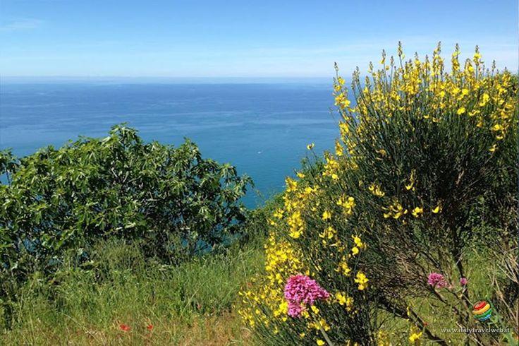 Mille gradini verso il blu verso l'immensità verso il paradiso del Parco delle Cinque Terre. Monesteroli è raggiungibile solo dalla Scalinata..