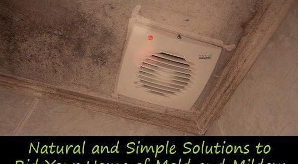 Natural and Simple Solutions to Rid Your Home of Mold and Mildew
