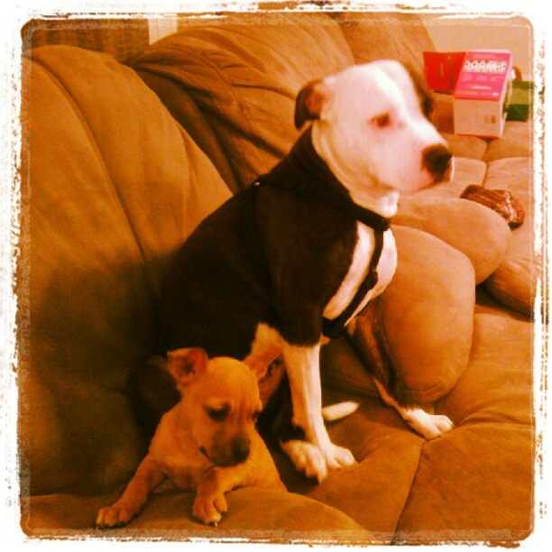 """judge the breed not the deed Brandy marshall needs your help with """"ban the deed not the breed"""" join brandy and 259 supporters today sign this petition today: brandy is counting on you."""