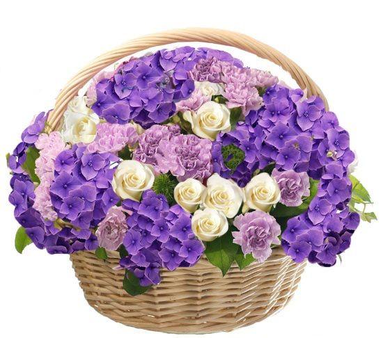 Гортензии синие, розы белые, гвоздика сиреневая. Букет в корзине из Гортензий, роз, гвоздик в зелени 31 шт. (Голландия)