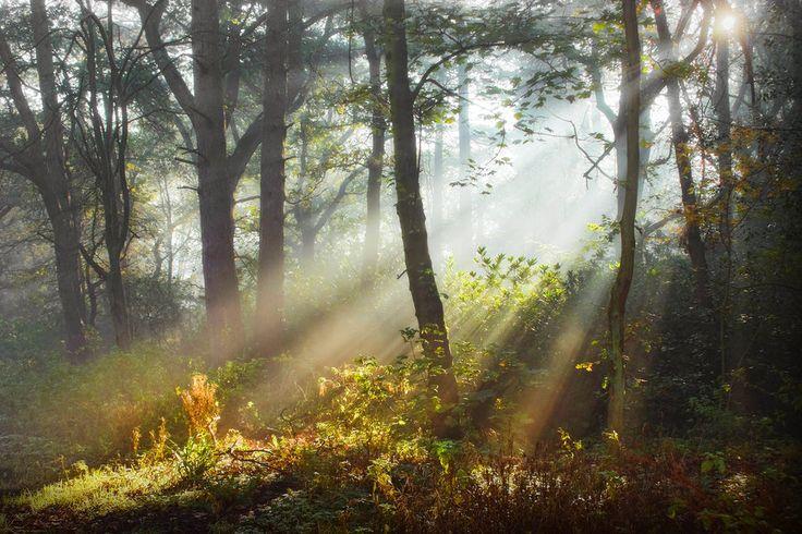 stock__misty_forest_light_2_by_needanewname-d4qwkht.jpg (900×600)