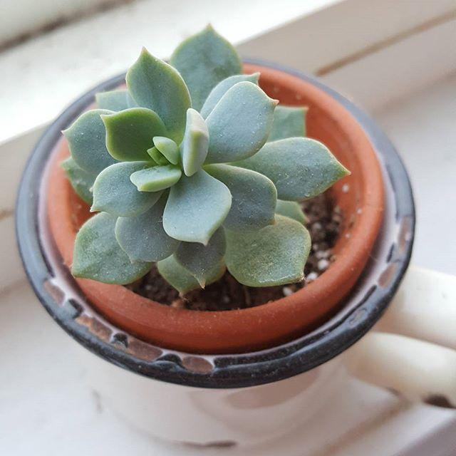 Ti prout. #succulents #plants #cute