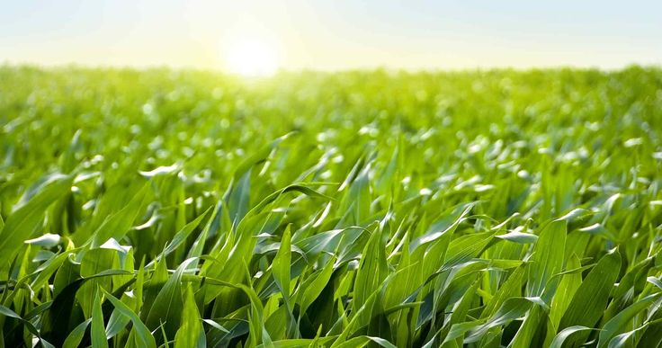 Garden and Agriculture Pictures : Average South Dakota Farm Pumps More Than $1M Into...