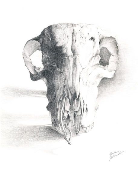 Skull by Greta Schimmel on artflakes.com as poster or art print $18.44  Biomedical Illustration; September, 2008.  Black prismacolor pencil on coquille board.  This sheep skull still life is the result of five weeks of observation. Medical illustration is perhaps the most nerve-wracking, tedious, time consuming and rewarding method of information mapping.