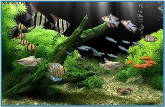 download gratis dream aquarium screensaver full version,screensaver aquariu...