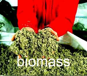 Biomass natural gas - an alternative to electricity Biomass is natural plant material consisting of vegitation and animal based materials. It can be converted into gas by heating at very high temperatures with steam and with allowing it to combust. The gas produced from this process is called