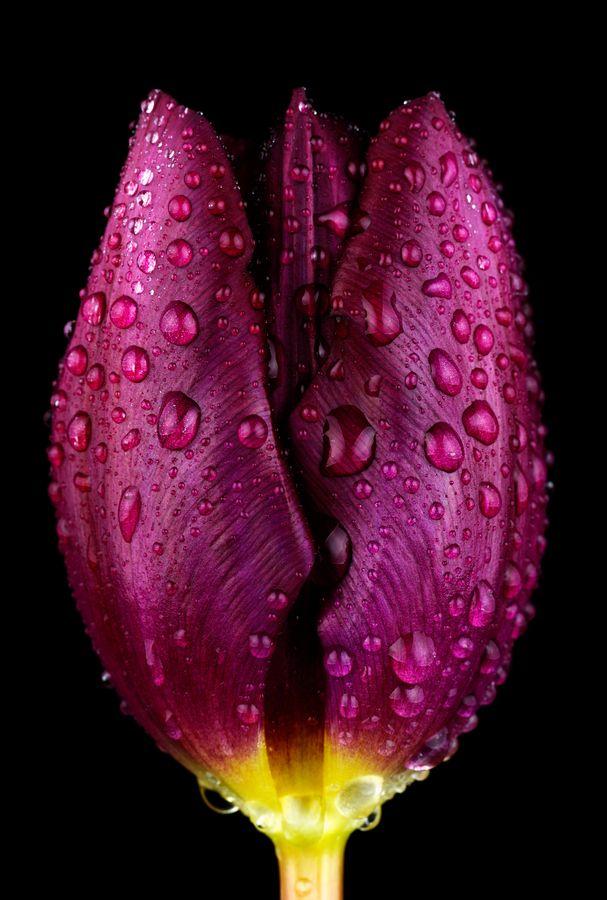 Purple by Mark Johnson