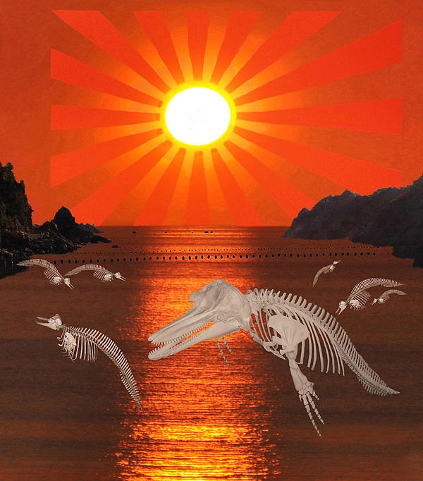 Dolphin Bay Taiji Cove  A picture made to protest against the ongoing slaughter of dolphins and Whales