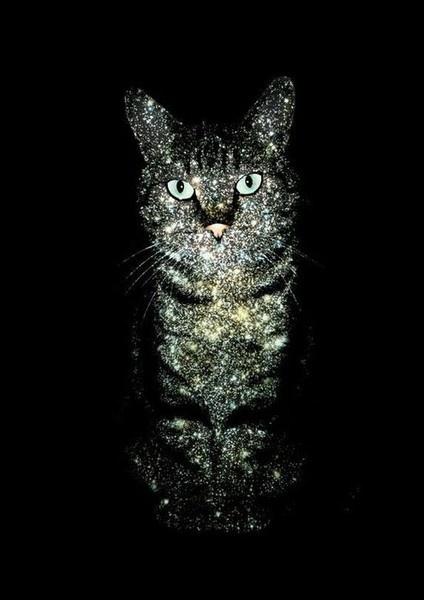 !: Glitter Kitty, Sparklecat, Sparkle Cat, Stuff, Glitter Cat, Glittercat, Black Cat, Celestial Cat, Animal