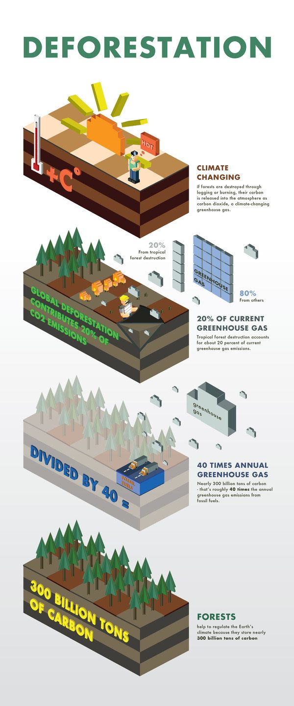 Deforestation Facts. www.dogwoodalliance.org