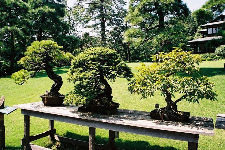 Bonsai Garden.