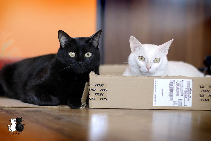 One box, two cats ;) #cats #box