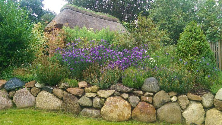 Friesenwall bepflanzt mit Wildblumen und Kräutern