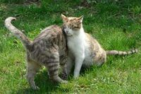 How to Make Your Own Natural Cats Repellant | eHow