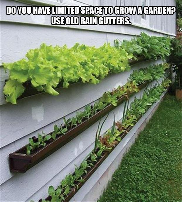 A-use-rain-gutters-to-grow-your-garden